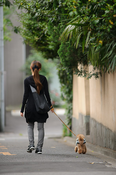 Walking Miss Poh-Poh ( I don't really know the name of the dog ) -- Minato Ward, Tokyo, Japan -- Copyright 2011 Jeffrey Friedl, http://regex.info/blog/