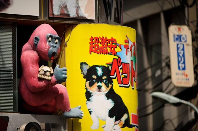 This Is Not Strange in Tokyo -- Minato Ward, Tokyo, Japan -- Copyright 2011 Jeffrey Friedl, http://regex.info/blog/