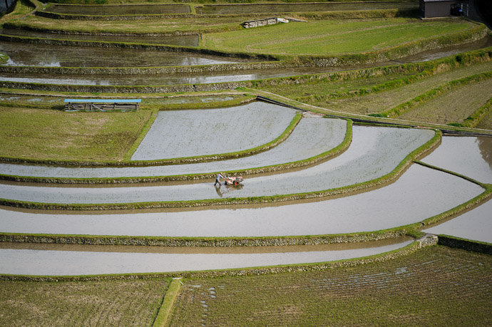 Solitary Toil -- Aragijima Rice Terraces (蘭島) -- Aridagawa, Wakayama, Japan -- Copyright 2011 Jeffrey Friedl, http://regex.info/blog/