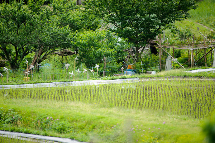 Garden and Rice -- Uji, Kyoto, Japan -- Copyright 2011 Jeffrey Friedl, http://regex.info/blog/