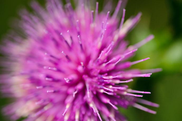 desktop background image of flowers by the side of a rural mountain road in Uji, Japan -- Uji, Kyoto, Japan -- Copyright 2011 Jeffrey Friedl, http://regex.info/blog/