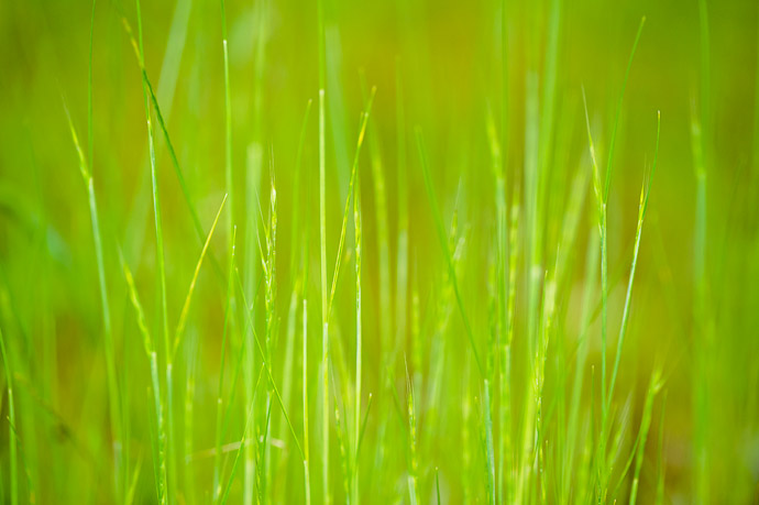 desktop background image of grass -- Simple Grass -- Kiyotakigu (清瀧宮) -- Uji, Kyoto, Japan -- Copyright 2011 Jeffrey Friedl, http://regex.info/blog/
