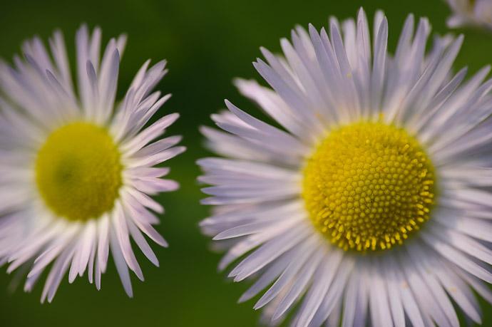 desktop background image of flowers by the side of a rural mountain road in Uji, Japan -- Detail -- Uji, Kyoto, Japan -- Copyright 2011 Jeffrey Friedl, http://regex.info/blog/