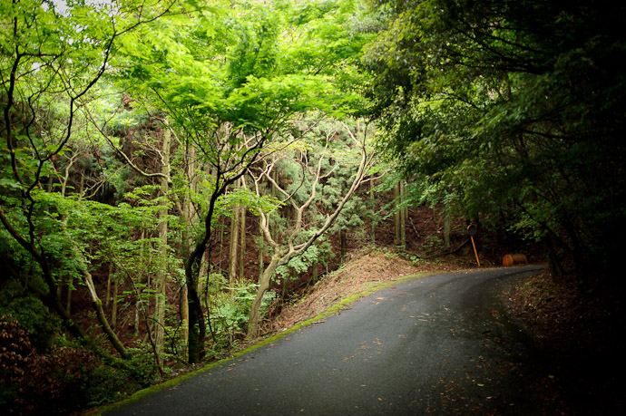 desktop background image of a mountain-road scene in Uji, Japan -- Eerily Bright -- Uji, Kyoto, Japan -- Copyright 2011 Jeffrey Friedl, http://regex.info/blog/
