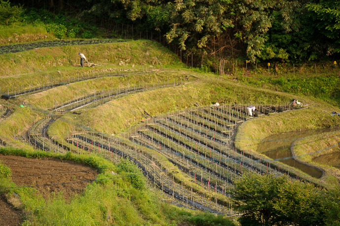 Heading Off To Fetch More Seedlings -- Uji, Kyoto, Japan -- Copyright 2011 Jeffrey Friedl, http://regex.info/blog/