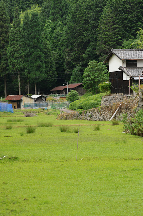 View From the End of the Road looking across a recently-abandoned rice paddy -- Uji, Kyoto, Japan -- Copyright 2011 Jeffrey Friedl, http://regex.info/blog/