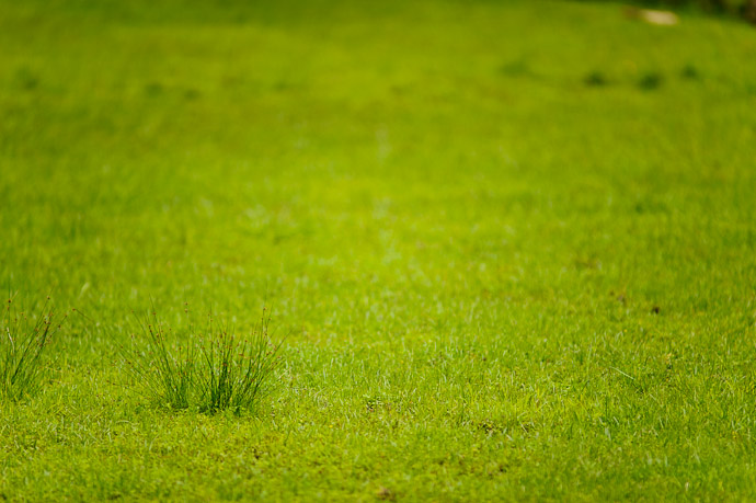 desktop background image of grass -- Uji, Kyoto, Japan -- Copyright 2011 Jeffrey Friedl, http://regex.info/blog/