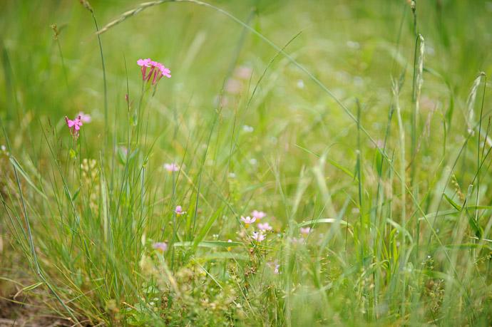 desktop background image of flowers and grass -- Roadside Weeds -- Uji, Kyoto, Japan -- Copyright 2011 Jeffrey Friedl, http://regex.info/blog/