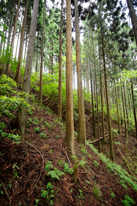 Looking Sideways -- Kyoto, Japan -- Copyright 2011 Jeffrey Friedl, http://regex.info/blog/