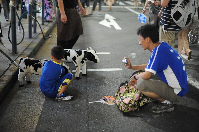 Cows for free photo ops -- Gion Matsuri (祇園祭) -- Kyoto, Japan -- Copyright 2011 Jeffrey Friedl, http://regex.info/blog/
