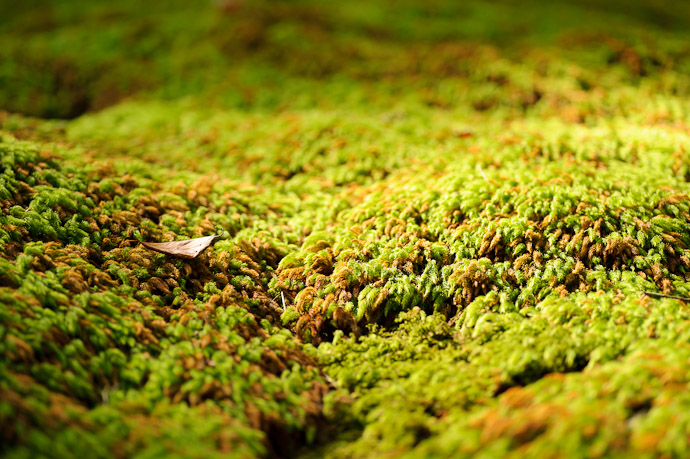 desktop background image of a leaf sitting on a bumpy mound of moss, looking like a boat riding the swells during a storm -- Boat in a Tempest -- Giouji Temple (祇王寺) -- Kyoto, Japan -- Copyright 2011 Jeffrey Friedl, http://regex.info/blog/