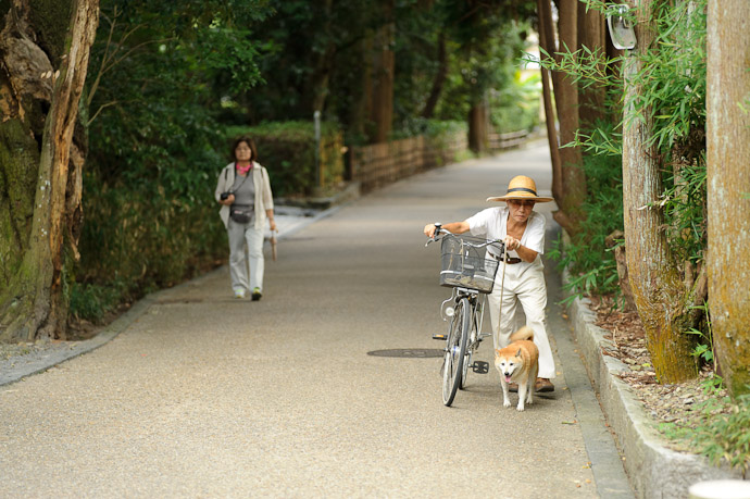 Afternoon Constitutional -- Arashiyama (嵐山) -- Kyoto, Japan -- Copyright 2011 Jeffrey Friedl, http://regex.info/blog/