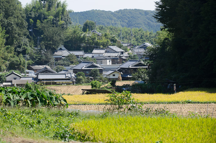Gardens, Rice Fields, and Village -- Ikoma, Nara, Japan -- Copyright 2011 Jeffrey Friedl, http://regex.info/blog/