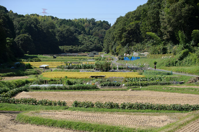 View From Afar -- Ikoma, Nara, Japan -- Copyright 2011 Jeffrey Friedl, http://regex.info/blog/