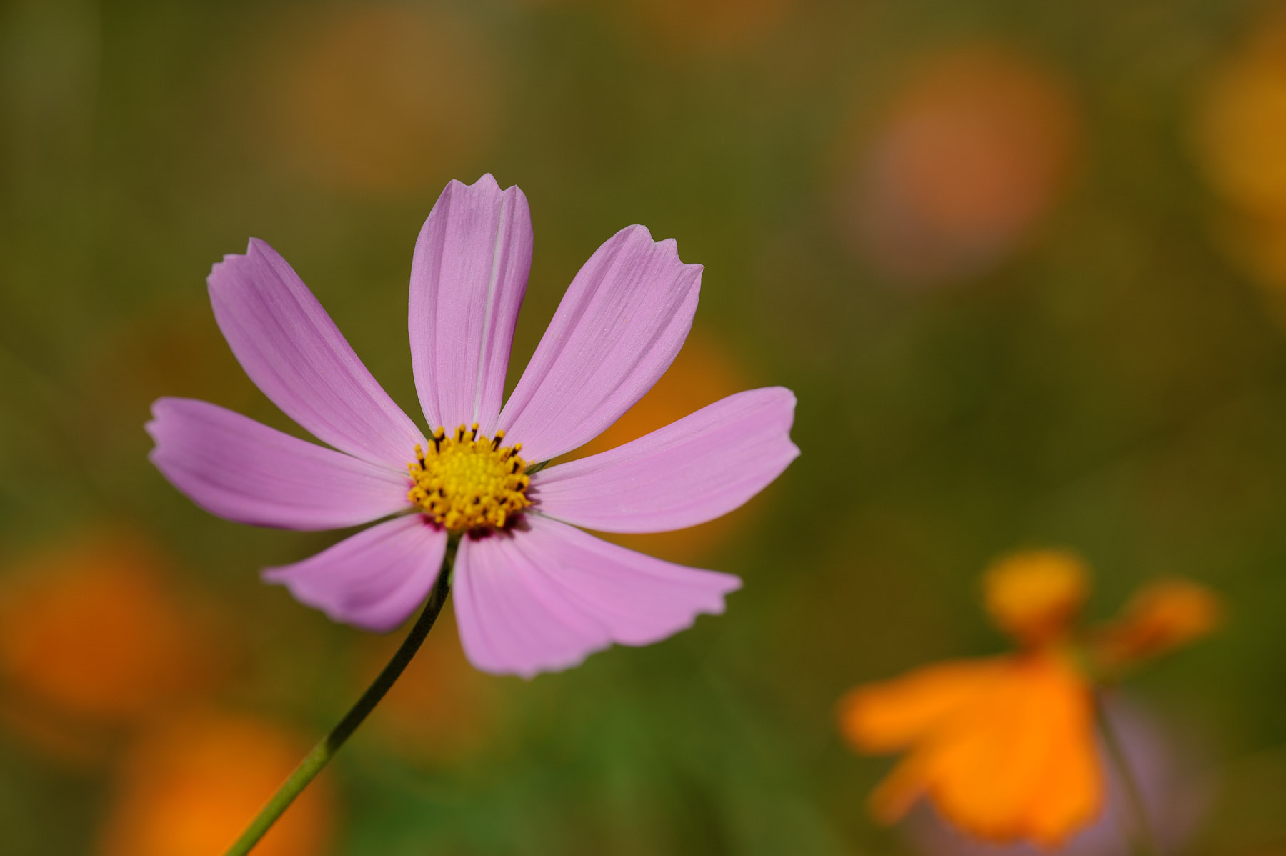 Jeffrey Friedl's Blog » Perfect Flower in the Mountains of Nara
