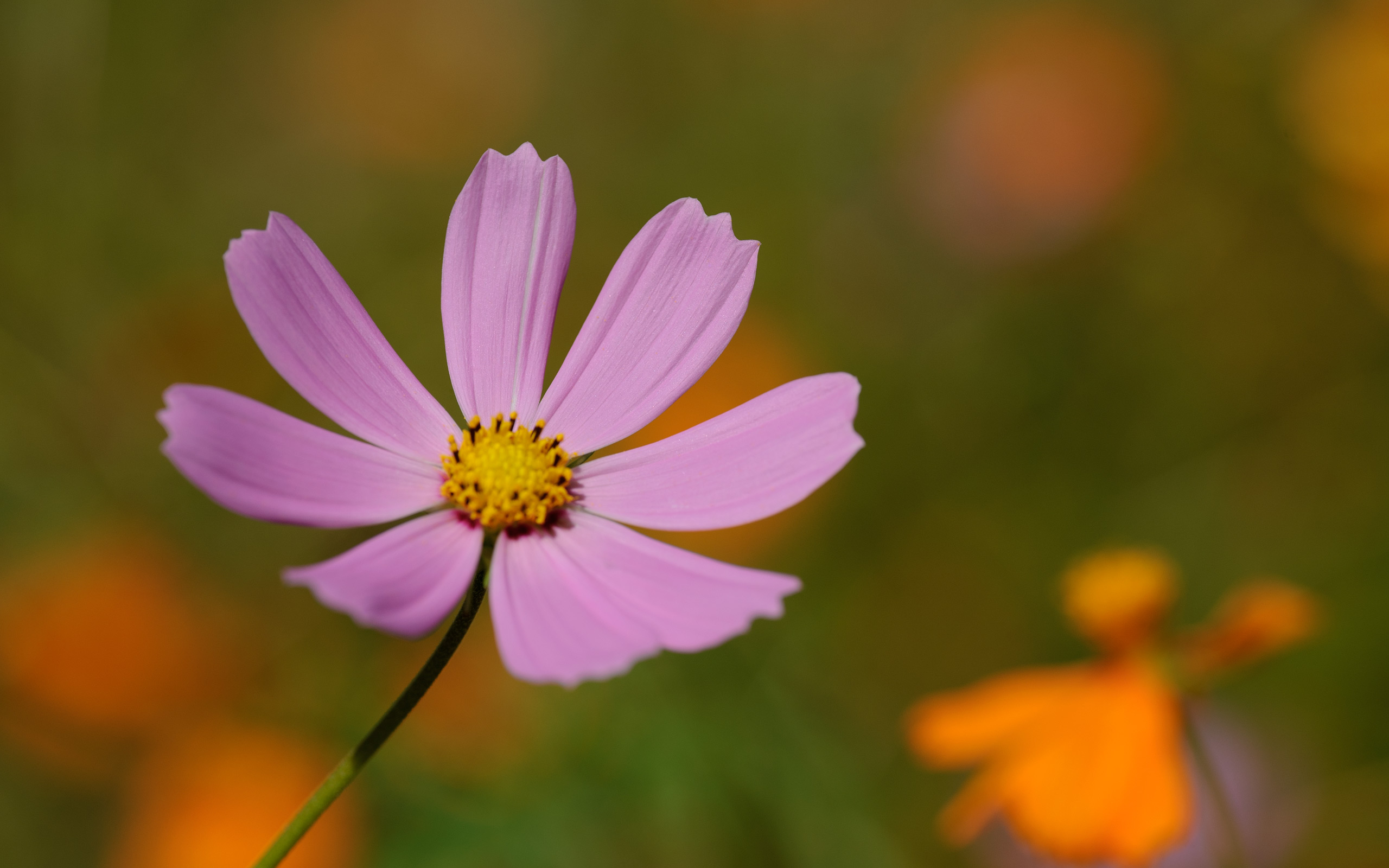 Jeffrey Friedls Blog Perfect Flower In The Mountains Of Nara