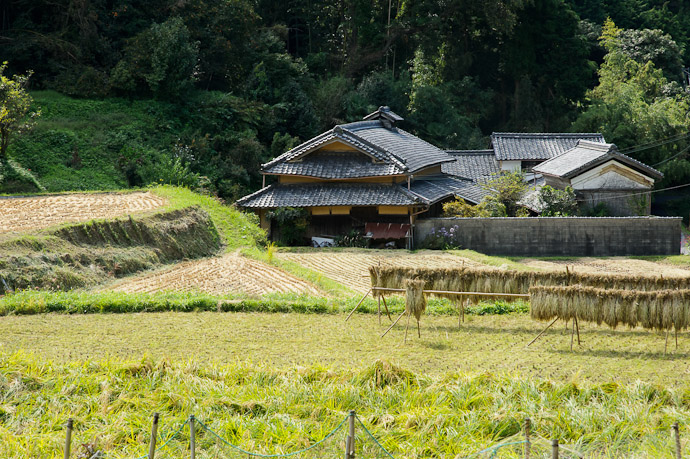 Harvested farm from last week with the wind-whipped rice -- Katano, Osaka, Japan -- Copyright 2011 Jeffrey Friedl, http://regex.info/blog/