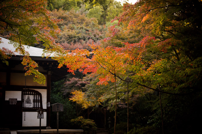 mild autumn colors at 地蔵院, the Bamboo Temple, in Kyoto Japan