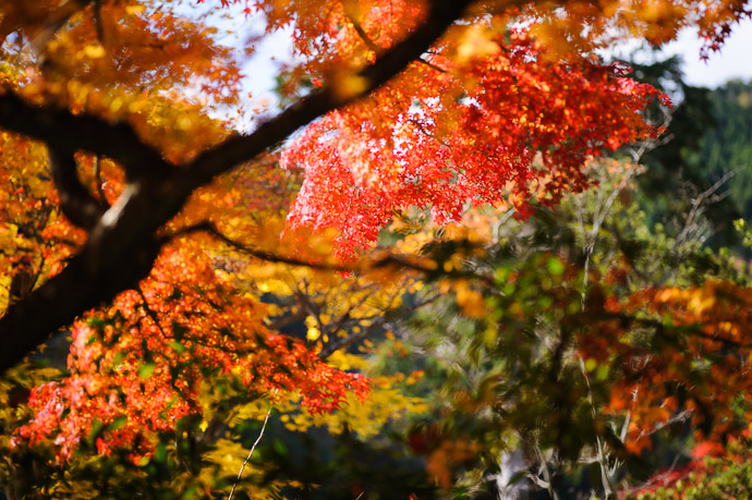 desktop background image of fall colors at the Yoshiminedera Temple (善峯寺), Kyoto Japan  --  Lots Going On hard to know where to focus  --  Yoshiminedera Temple (善峯寺)  --  Copyright 2011 Jeffrey Friedl, http://regex.info/blog/
