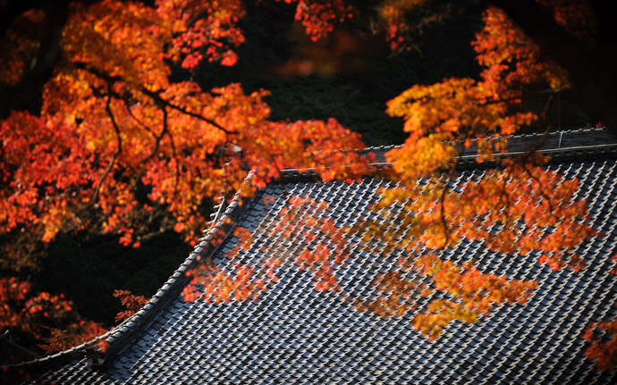 desktop background image of fall colors at the Yoshiminedera Temple (善峯寺), Kyoto Japan  --  So Uniform It Hurts  --  Yoshiminedera Temple (善峯寺)  --  Copyright 2011 Jeffrey Friedl, http://regex.info/blog/