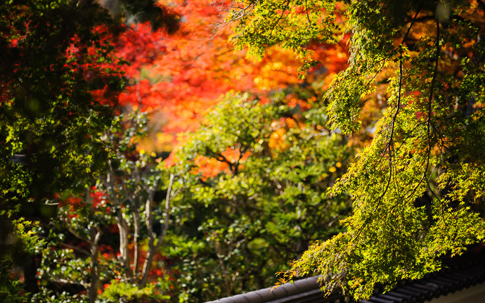 desktop background image of fall colors at the Yoshiminedera Temple (善峯寺), Kyoto Japan  --  Abstract  --  Yoshiminedera Temple (善峯寺)  --  Copyright 2011 Jeffrey Friedl, http://regex.info/blog/