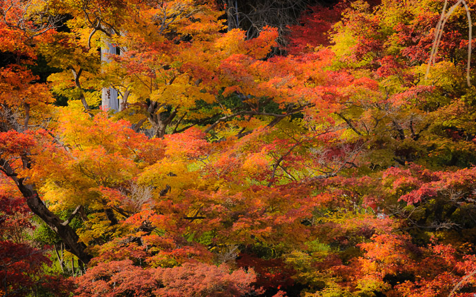 desktop background image of a fall-foliage scene at the Yoshiminedera Temple (善峯寺), Kyoto Japan  --  Yoshiminedera Temple (善峯寺)  --  Yoshiminedera Temple (善峯寺)  --  Copyright 2011 Jeffrey Friedl, http://regex.info/blog/  --  This photo is licensed to the public under the Creative Commons Attribution-NonCommercial 3.0 Unported License http://creativecommons.org/licenses/by-nc/3.0/ (non-commercial use is freely allowed if proper attribution is given, including a link back to this page on http://regex.info/ when used online)