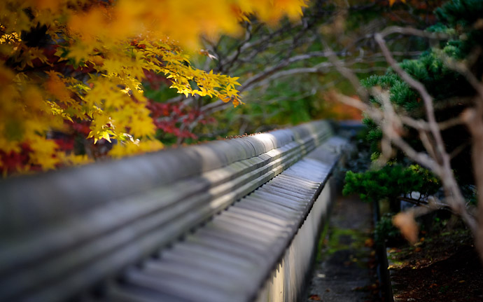 a temple fence with autumn colors at the Yoshiminedera Temple, Kyoto Japan