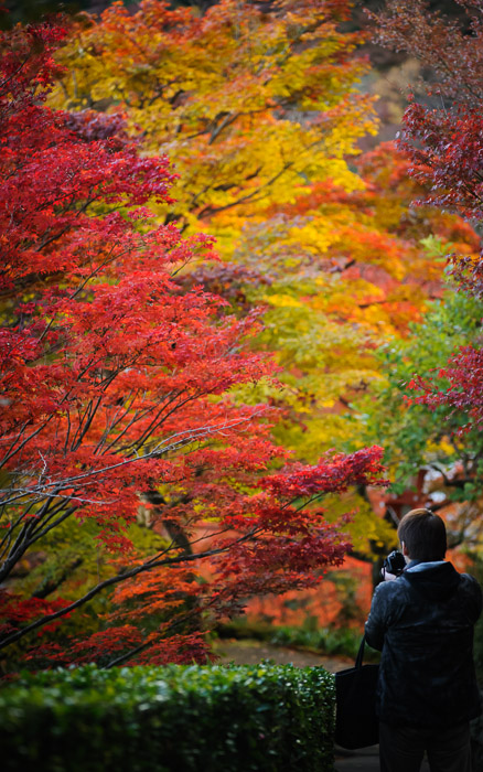 desktop background image of a fall-foliage scene at the Yoshiminedera Temple (善峯寺), Kyoto Japan  --  Photo Op #7293 Yoshiminedera Temple (善峯寺)  --  Yoshiminedera Temple (善峯寺)  --  Copyright 2011 Jeffrey Friedl, http://regex.info/blog/  --  This photo is licensed to the public under the Creative Commons Attribution-NonCommercial 3.0 Unported License http://creativecommons.org/licenses/by-nc/3.0/ (non-commercial use is freely allowed if proper attribution is given, including a link back to this page on http://regex.info/ when used online)