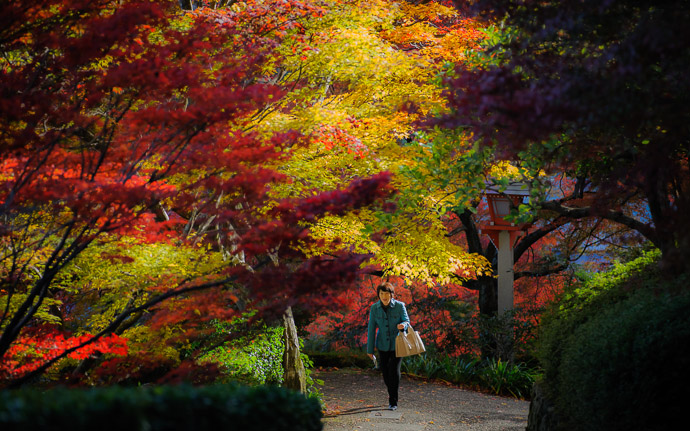 desktop background image of a fall-foliage scene at the Yoshiminedera Temple (善峯寺), Kyoto Japan  --  Stroll Yoshiminedera Temple (善峯寺)  --  Yoshiminedera Temple (善峯寺)  --  Copyright 2011 Jeffrey Friedl, http://regex.info/blog/  --  This photo is licensed to the public under the Creative Commons Attribution-NonCommercial 3.0 Unported License http://creativecommons.org/licenses/by-nc/3.0/ (non-commercial use is freely allowed if proper attribution is given, including a link back to this page on http://regex.info/ when used online)