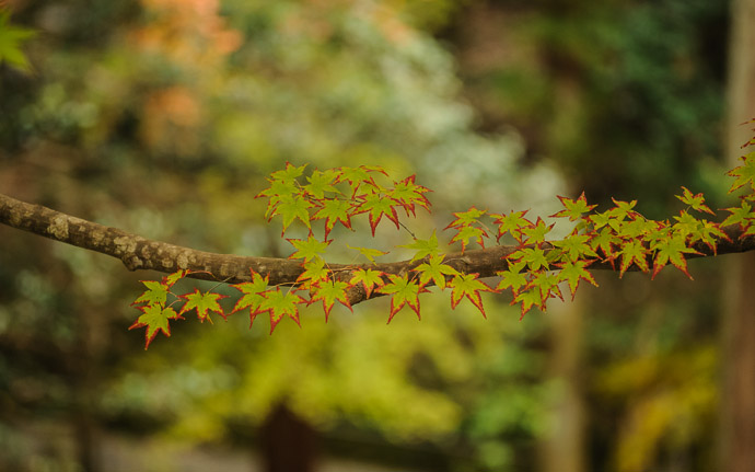 desktop background image of a fall-foliage scene at the Imakumano Kannonji Temple (今熊野観音寺), Kyoto Japan  --  Tree Bling Imakumano Kannonji Temple (今熊野観音寺)  --  Imakumano Kannonji Temple (今熊野観音寺)   --  Copyright 2011 Jeffrey Friedl, http://regex.info/blog/  --  This photo is licensed to the public under the Creative Commons Attribution-NonCommercial 3.0 Unported License http://creativecommons.org/licenses/by-nc/3.0/ (non-commercial use is freely allowed if proper attribution is given, including a link back to this page on http://regex.info/ when used online)