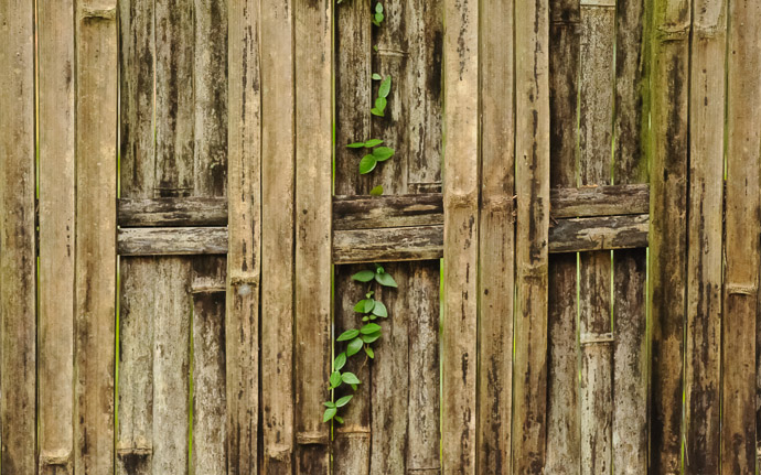 desktop background image of a vine-covered wall at the Raigoin Temple (来迎院), Kyoto Japan  --  Wall at the Raigoin Temple (来迎院), Kyoto Japan  --  Raigoin Temple (来迎院)  --  Copyright 2011 Jeffrey Friedl, http://regex.info/blog/  --  This photo is licensed to the public under the Creative Commons Attribution-NonCommercial 3.0 Unported License http://creativecommons.org/licenses/by-nc/3.0/ (non-commercial use is freely allowed if proper attribution is given, including a link back to this page on http://regex.info/ when used online)
