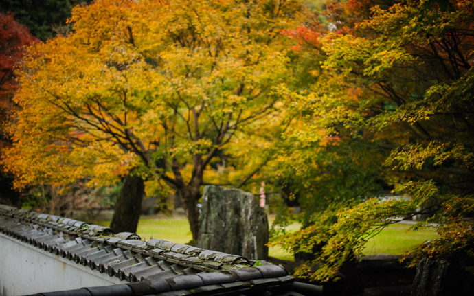 desktop background image of a fall-foliage scene at the Zenryuuji Temple and Inari Daimyou Shrine (善龍寺、稲荷大明神社), Kyoto Japan  --  Wall Top Zenryuuji Temple and Inari Daimyou Shrine (善龍寺、 稲荷大明神社), Kyoto Japan  --  Zenryuuji Temple and Inari Daimyou Shrine (善龍寺、稲荷大明神社)  --  Copyright 2011 Jeffrey Friedl, http://regex.info/blog/  --  This photo is licensed to the public under the Creative Commons Attribution-NonCommercial 3.0 Unported License http://creativecommons.org/licenses/by-nc/3.0/ (non-commercial use is freely allowed if proper attribution is given, including a link back to this page on http://regex.info/ when used online)