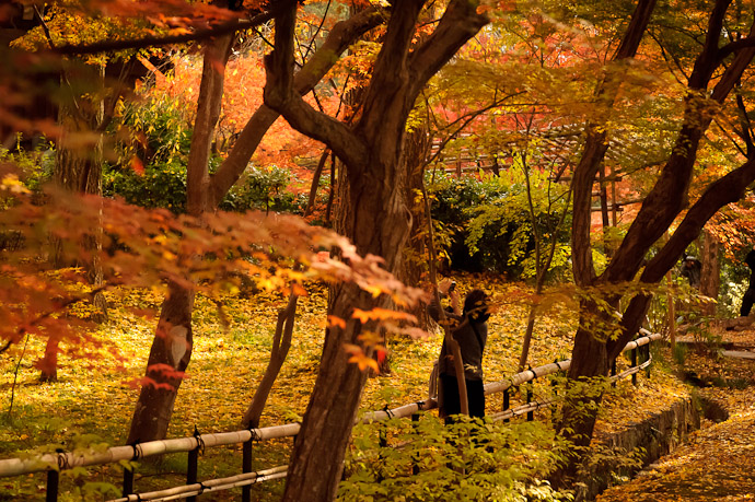fall colors at the Shinnyodo Temple, Kyoto Japan