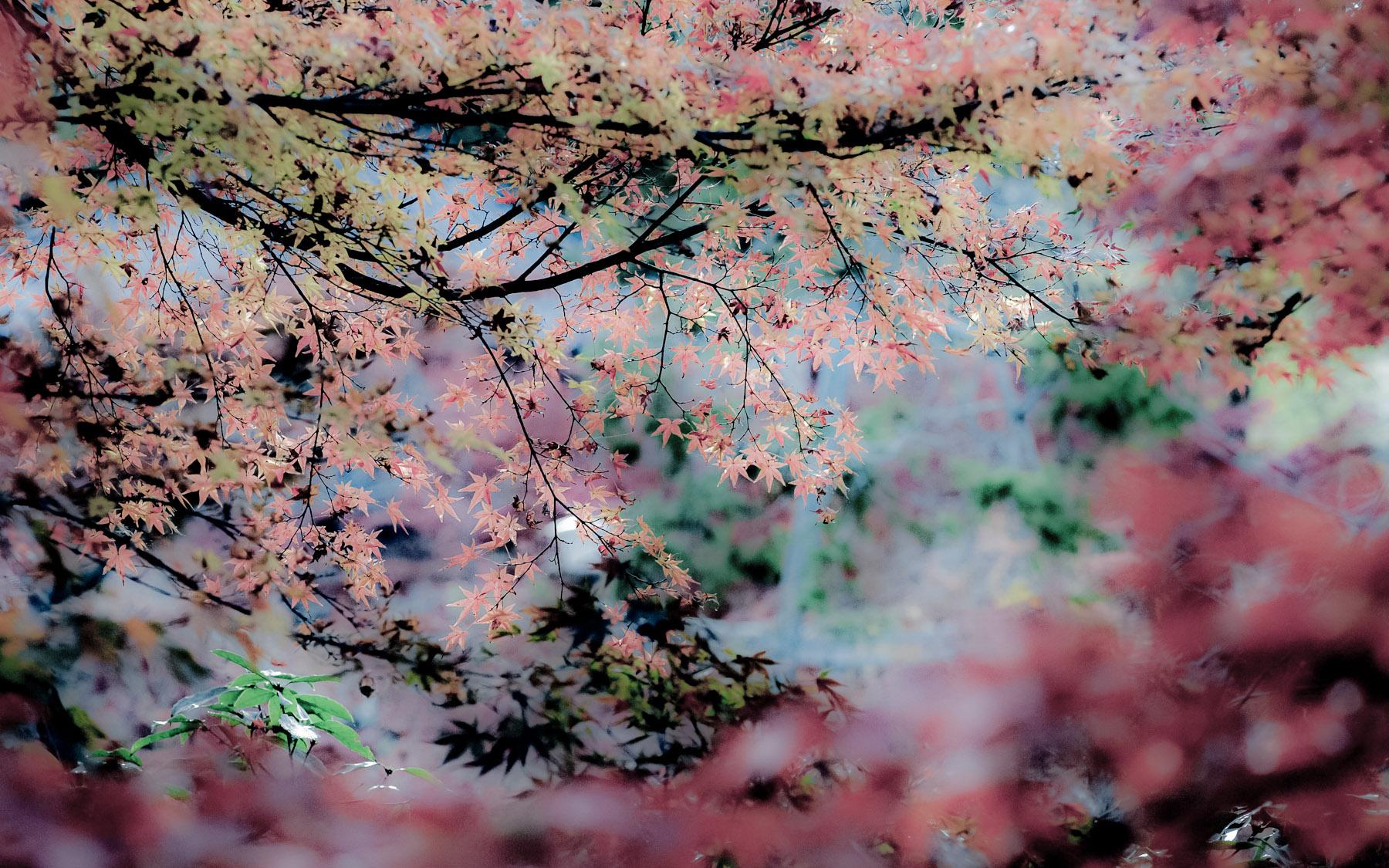 Calm Backgrounds For Desktop Desktop Background Image of a