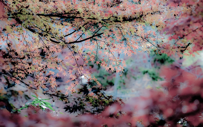 desktop background image of a pastelized fall-foliage scene  --  Oddly-Calming Pastel Fall Foliage  --  Kyoto, Japan  --  Copyright 2011 Jeffrey Friedl, http://regex.info/blog/