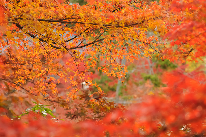 Generic Fall Leaves Eikando Temple, Kyoto Japan (永観堂)  --  Copyright 2011 Jeffrey Friedl, http://regex.info/blog/