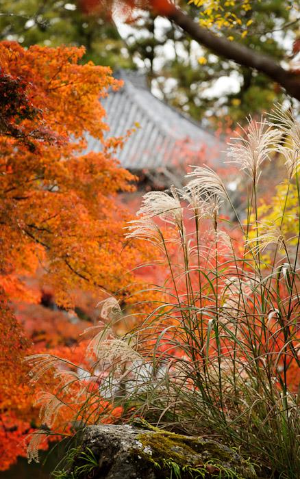 fall scenes at the Eikando Temple (永観堂) in Kyoto, Japan