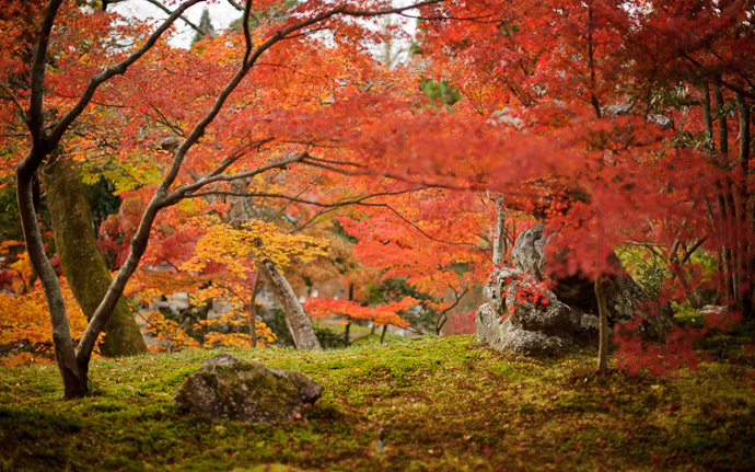 fall scenes at the Eikando Temple (永観堂) in Kyoto, Japan