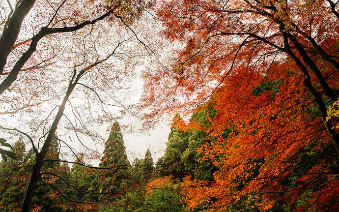 desktop background image of a fall-foliage scene on a mountain path behind the Jingoji Temple (神護寺) in north-western Kyoto, Japan  --  Closer To What It Felt Like  --  Jingoji Temple (神護寺)  --  Copyright 2011 Jeffrey Friedl, http://regex.info/blog/