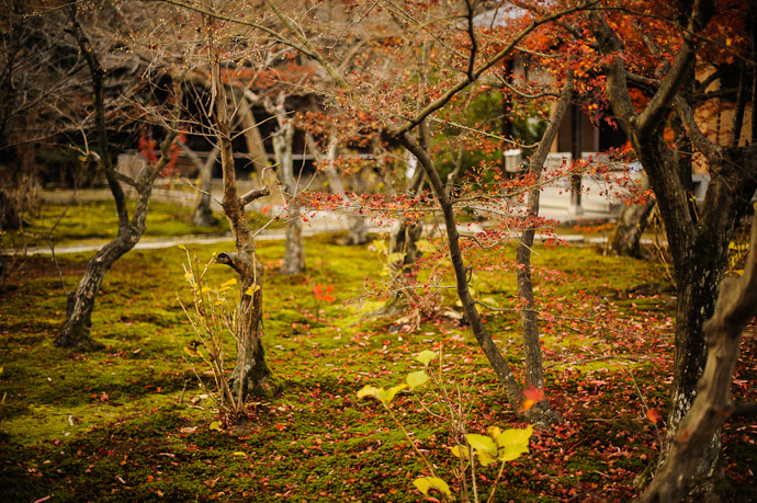 Garden  --  Kajyuuji Temple (勧修寺)  --  Kyoto, Japan  --  Copyright 2011 Jeffrey Friedl, http://regex.info/blog/