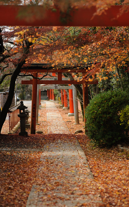 the gate-filled path to Mt. Yoshida's Takenaka Inari Shrine, in Kyoto Japan