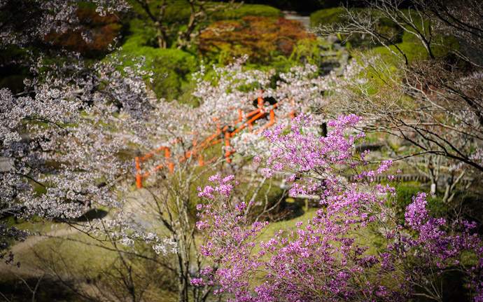 a garden at the Ishiyama-dera Temple (石山寺) in Otsu Japan