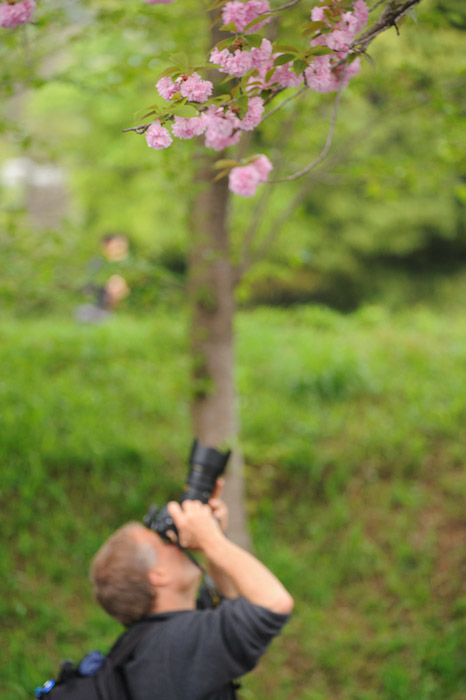 ( the blossoms in the picture were much closer than Paul, who was aiming at something else )  --  Kyoto, Japan  --  Copyright 2012 Jeffrey Friedl, http://regex.info/blog/