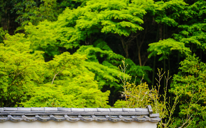 desktop background image of a traditional Japanese wall set before a backdrop of vividly green trees  --  Kyoto, Japan  --  Copyright 2012 Jeffrey Friedl, http://regex.info/blog/