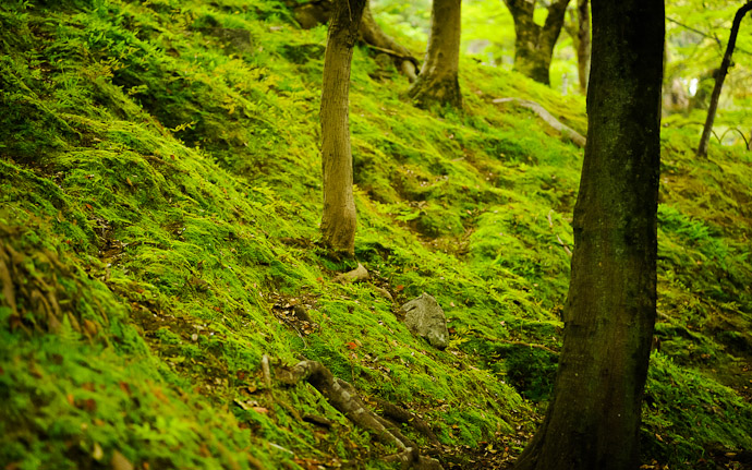 desktop background image of mossy hillside in Kyoto, Japan  --  Front Lawn of sorts  --  Maruyama Park  --  Copyright 2012 Jeffrey Friedl, http://regex.info/blog/