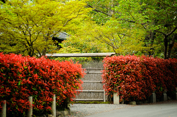 Brilliantly Glowing Red entrance to something or other  --  Maruyama Park  --  Kyoto, Japan  --  Copyright 2012 Jeffrey Friedl, http://regex.info/blog/