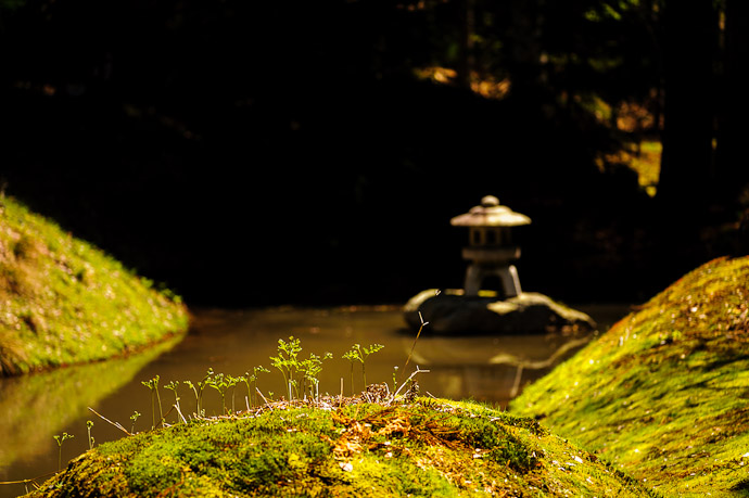 Garden Detail  --  Joushoukou-ji Temple (常照皇寺)  --  Kyoto, Japan  --  Copyright 2012 Jeffrey Friedl, http://regex.info/blog/