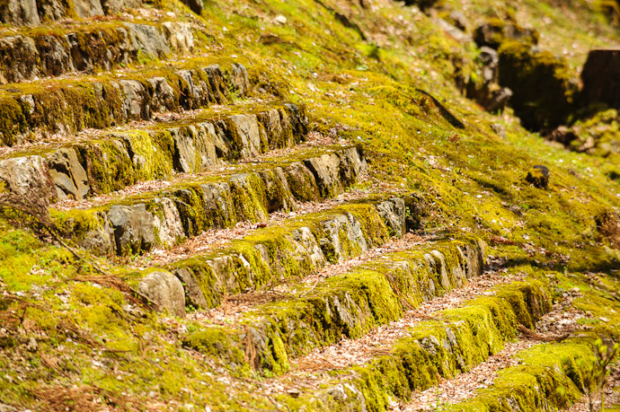 Waterfall of Moss rarely-used steps to the imperial entrance (but they're there should the Emperor of Japan choose to pay a visit )  --  Joushoukou-ji Temple (常照皇寺)  --  Kyoto, Japan  --  Copyright 2012 Jeffrey Friedl, http://regex.info/blog/
