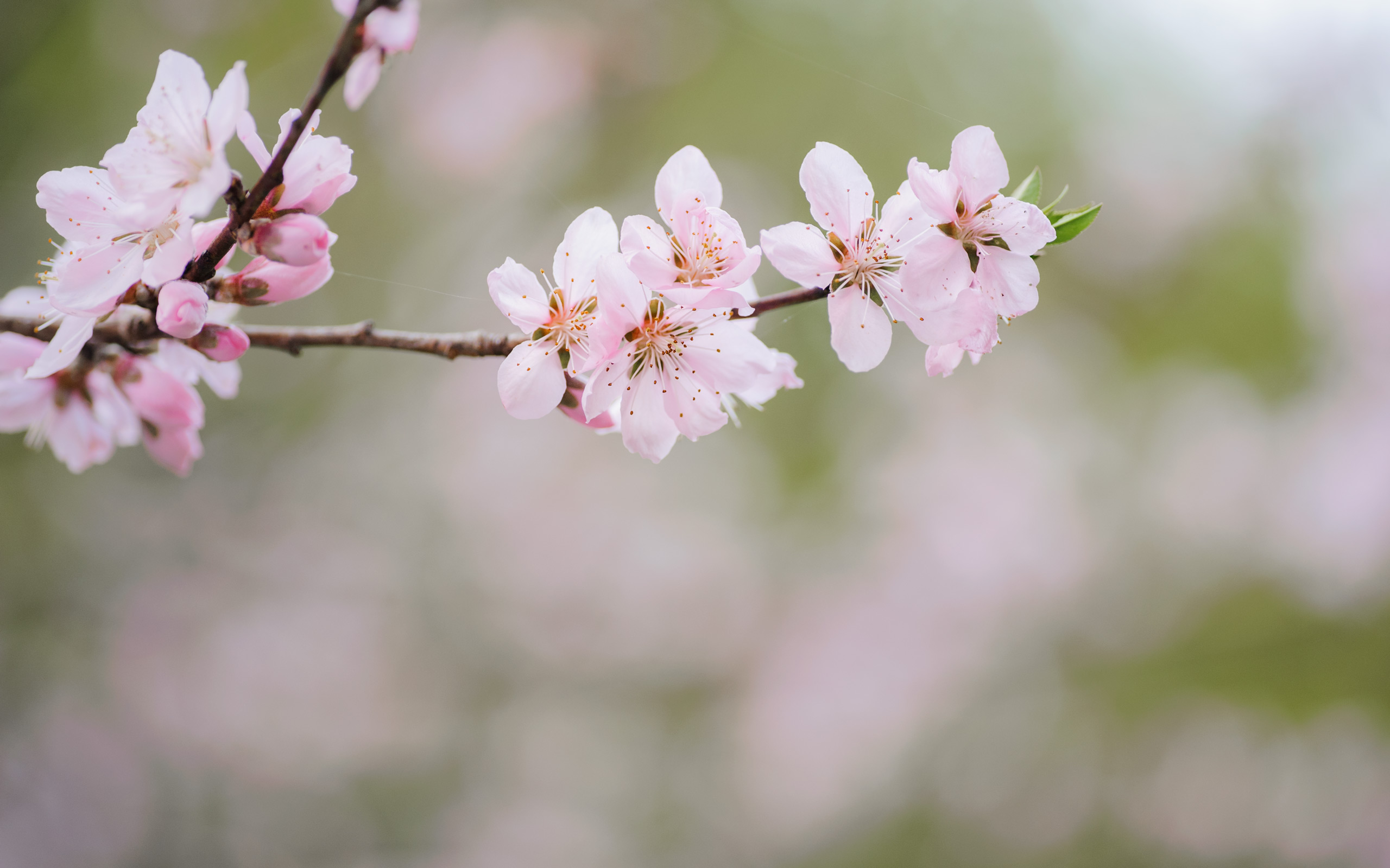 Jeffrey Friedls Blog Pretty As A Peach Blossom