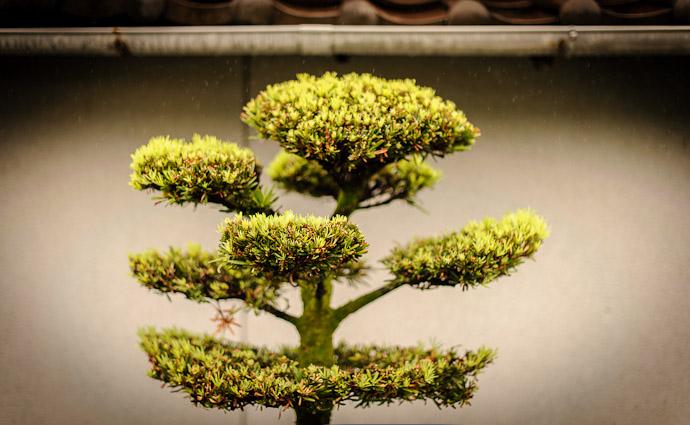 Manicured  --  Kyoto, Japan  --  Copyright 2012 Jeffrey Friedl, http://regex.info/blog/